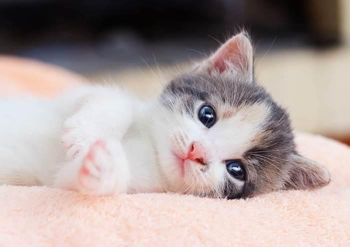 Chiêm bao thấy mèo con đánh con gì may mắn?