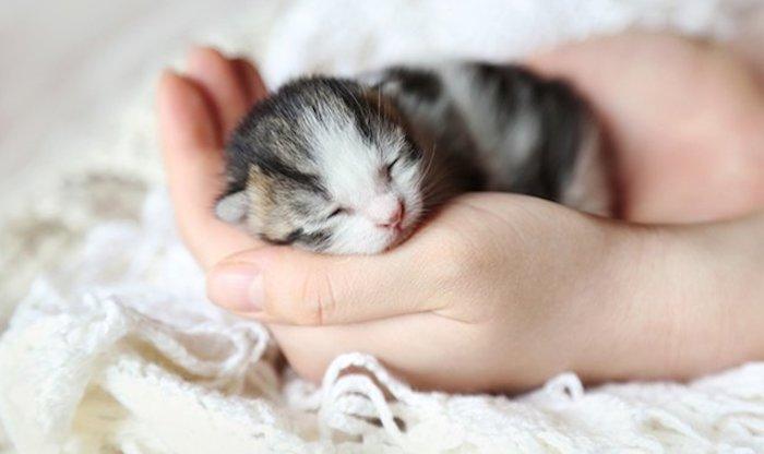 Ngủ mộng thấy ôm mèo con